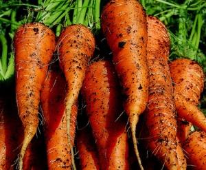 carrots-thumb-480xauto-954